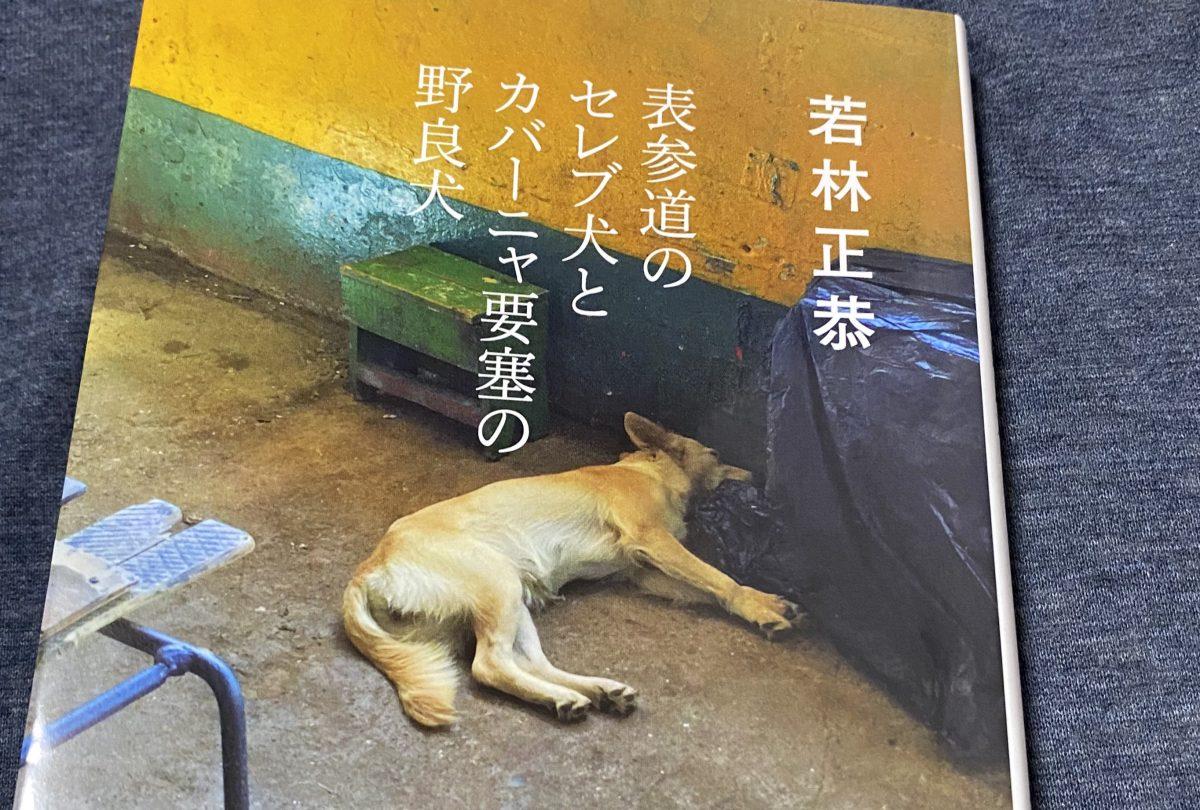 【写真】本の表紙の一部。若林正恭『表参道のセレブ犬とカバーニャ要塞の野良犬』コンクリートの上に寝そべっている犬が写っている